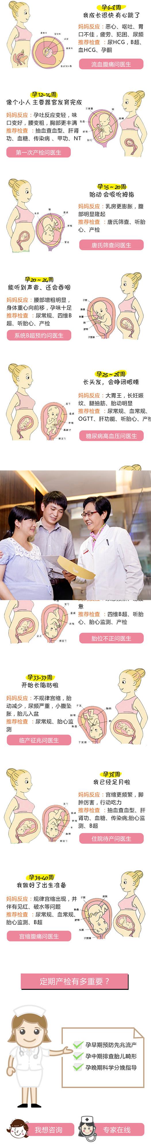 孕6-8周 成长很快 有心跳了(配发育图) 妈妈反应:恶心、呕吐、胃口不佳,疲劳、犯困、尿频  推荐检查 :尿HCG,B超、血HCG、孕酮                怀孕流血、腹痛  问医生 孕12-14周  像个小人 主要器官发育完成  (配发育图)           妈妈变化:孕吐反应变轻,味口变好,腰变粗,胸部更丰满。 推荐检查:抽血查血型、肝肾功、血糖、传染病 、甲功、NT 第一次产检 问医生   孕15~20周 胎动 会吸吮拇指(配发育图) 妈妈变化:乳房更膨胀,腹部明显隆起。 推荐检查:唐氏筛查、听胎心、产检  唐氏筛查  问医生    孕20~24周 能听到声音、还会吞咽(配发育图) 妈妈变化:腰部增粗明显,身体重心向前移,孕味十足 推荐检查:尿常规、四维B超、听胎心、产检 系统B超预约  问医生    孕25~28周  长头发,会睁闭眼睛(配发育图) 妈妈变化:大胃王,长妊娠纹、腿抽筋、胎动明显。 推荐检查:尿常规、血常规、OGTT、肝功能、听胎心、产检 孕期糖尿病、高血压  问医生     孕29~30周  头发浓密、骨骼变硬(配发育图) 妈妈变化:体重继续增加,行动不便、出现假性宫缩。 推荐检查:尿常规、听胎心、产检 脚肿   问医生 孕31-32周 内脏器官发育成熟(配发育图) 妈妈变化:尿意频繁、易疲惫 推荐检查:四维B超、听胎心、胎心监测、产检 胎位不正 问医生 孕33-37周  开始长脂肪啦(配发育图) 妈妈变化:不规律宫缩,胎动减少,尿频严重,小腹坠胀,胎儿入盆。 推荐检查:尿常规、胎心监测 临产征兆 问医生 孕38周 已经足月啦(配发育图) 妈妈变化:宫缩更频繁,脚肿厉害,行动吃力 推荐检查:抽血查血型、肝肾功、血糖、传染病;胎心监测、B超 住院待产 问医生 孕39-40周 做好了出生准备(配发育图) 妈妈变化:规律宫缩出现,并伴有见红、破水等问题。 推荐检查:尿常规、血常规、胎心监测、B超 宫缩腹痛 问医生 定期产检有多重要? 孕早期预防先兆流产  孕中期排查胎儿畸形  孕晚期科学分娩指导 怀孕产检 问医院